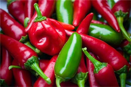 现在辣椒价格大概多少钱一斤?2019年种植赚钱吗?