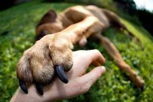 狗狗趾间炎简单治疗方法